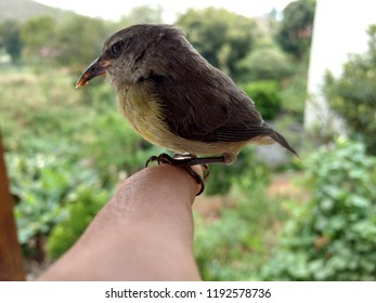 Beautiful Bird In The Finger