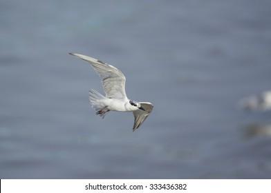 beautiful bird in flight