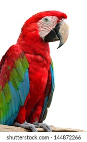 A beautiful bird Greenwinged Macaw isolate on white background.