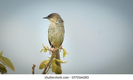 Kumar Trees Images Stock Photos Vectors Shutterstock