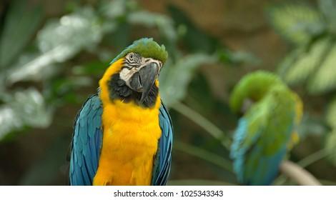 A beautiful bird poses for the photogragh.