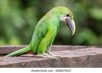 Beautiful bird pretending to be crestfallen