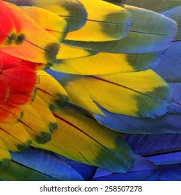 Beautiful bird Scarlet Macaw feathers.