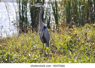 beautiful bird in southern florida