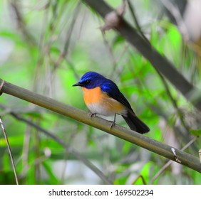 Beautiful bird  standing on a  branch