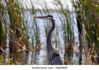 a beautiful bird stands in the water in southern florida