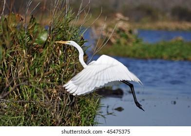 a beautiful bird takes off in flight