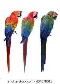 Beautiful birds Scarlet Macaw; Red-and-green Macaw or Greenwinged macaw and Harlequin Macaw isolated on white background.