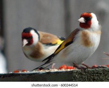 beautiful birds in the wild