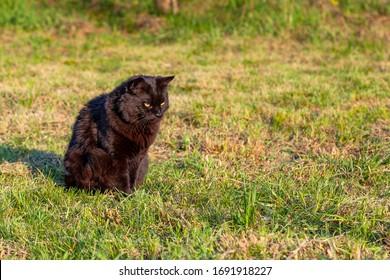 Beautiful black cat in the grass.