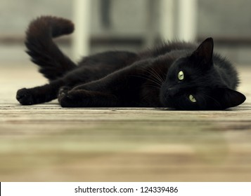 beautiful black cat with green eyes lying on wooden floor