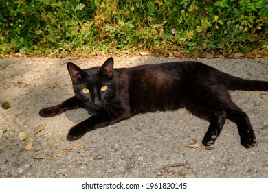 Beautiful black cat with green eyes on concrete floor