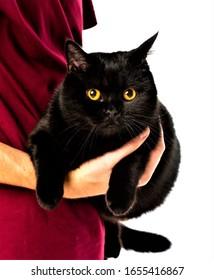 Beautiful Black Cat HD Image