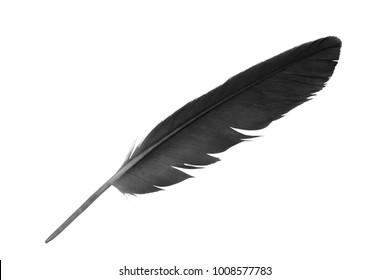 Beautiful black feather isolated on white background
