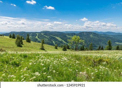 Beautiful Black Forest