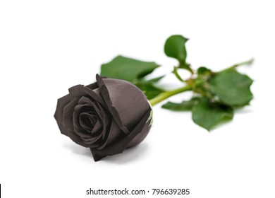 The beautiful black rose isolated on white background for bad Valentine's Day