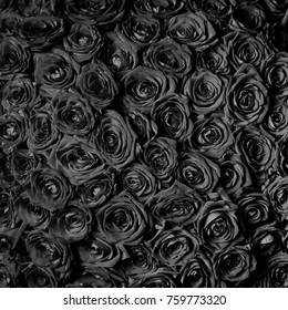 beautiful black roses. floral background