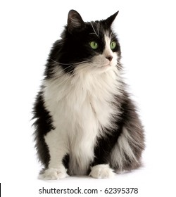 Beautiful black and white male cat with green eyes