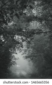Beautiful black and white photography of early morning foggy countryside landscape.