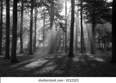 Beautiful black and white ray of light.