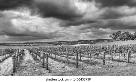 Beautiful black and white view of some McLaren Vale vineyards under dramatic sky, Southern Australia