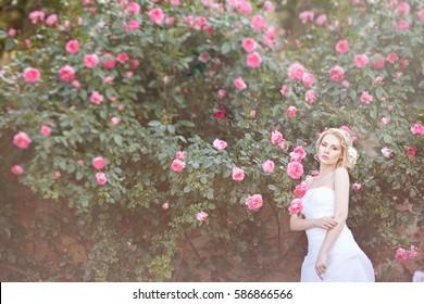 Beautiful Blond Bride near a Flowering Bush Roses Posing in a Wedding Dress