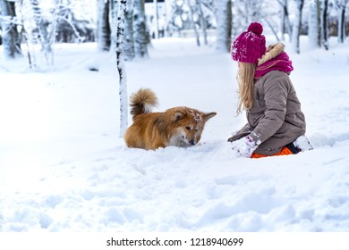 beautiful blond girl and corgi fluffy at the winter day