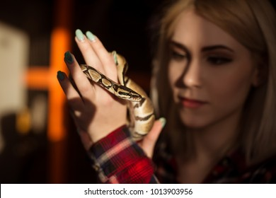 A beautiful blond woman is holding a small royal python in her hands. Contact zoo.