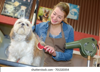 beautiful blonde dog groomer at work