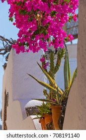 Beautiful blooming bougenvilia in Emporio on the island of Santorini in Greece, Europe.