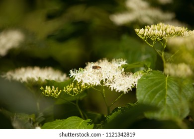 Beautiful blooming bush with bee. Nature background