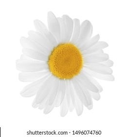 Beautiful blooming chamomile flower isolated on white