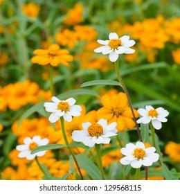 Beautiful blooming flowers orange color