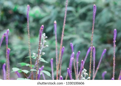 Beautiful blooming grass on the blurred background. Macro, soft focus