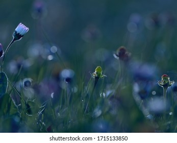 Beautiful blooming meadow with field flowers and selective focus. - Shutterstock ID 1715133850