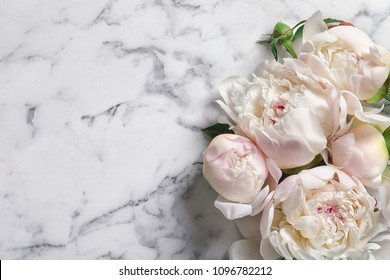 Beautiful blooming peony flowers on marble background
