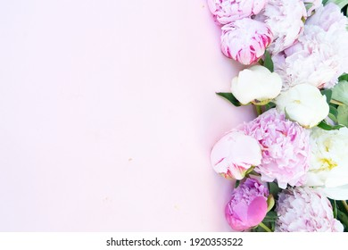 Beautiful blooming pink and white peony flowers border on pink table with copy space for your text, top view and flat lay background