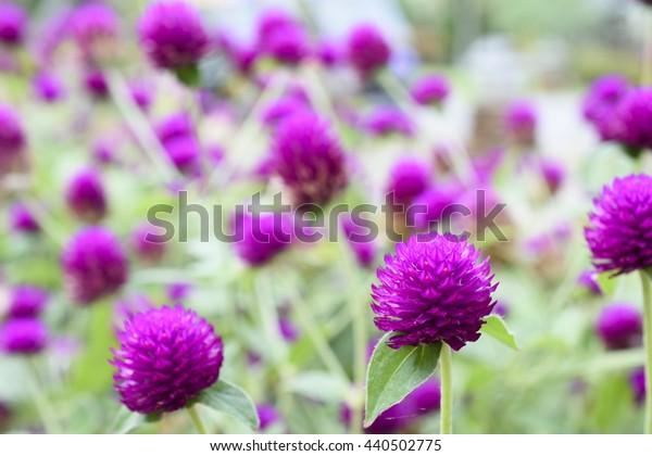 Beautiful Blooming Purple Flower