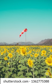 Beautiful blooming sunflowers field farming landscape with mountain hill and clear sunny day blue sky background in the summer morning, Thailand. Sunflowers oil is the non-volatile oil from seeds.