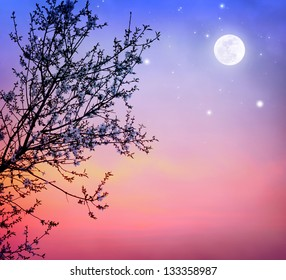 Beautiful blooming tree over dark night sky background, little white flowers on tree branch in moonlight, spring nature