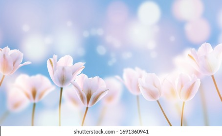 beautiful blooming tulip field on abstract blue sky in springtime, floral concept