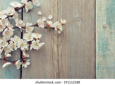Beautiful blossom branch over wooden background closeup