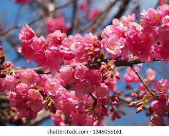 beautiful blossom flowers in spring season