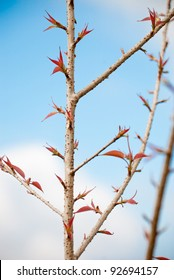 Beautiful blossom red leaf in blue sky background