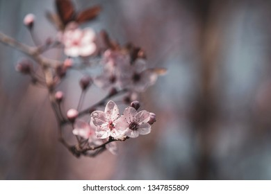 Beautiful blossom in spring time
