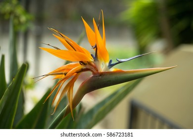 Beautiful blossoming flower, orange color, with green leaves on sunny summer day on blurred natural background