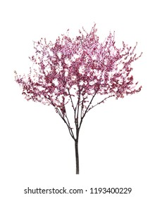 Beautiful blossoming tree on white background