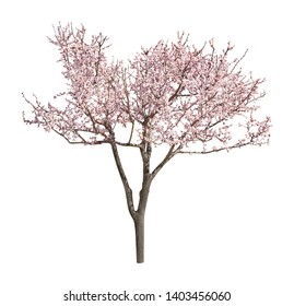 Beautiful blossoming tree with tender flowers on white background