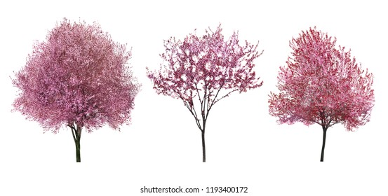 Beautiful blossoming trees on white background