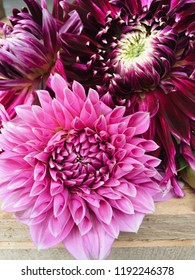 Beautiful blossoms of 'Lucky Number' and 'Vancouver' Dahlia flowers on wooden background, close up
